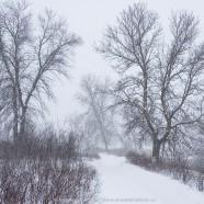 Snow storm in Wanuskewin Park