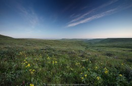 Sunrise in Grasslands National Park – prairie with golden bean and Three-flowered avens in bloom