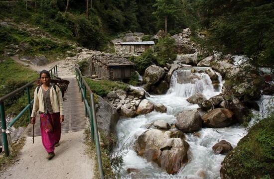 Woman crossing a bridge over mountain stream. Khumbu region in Himalayas, Nepal