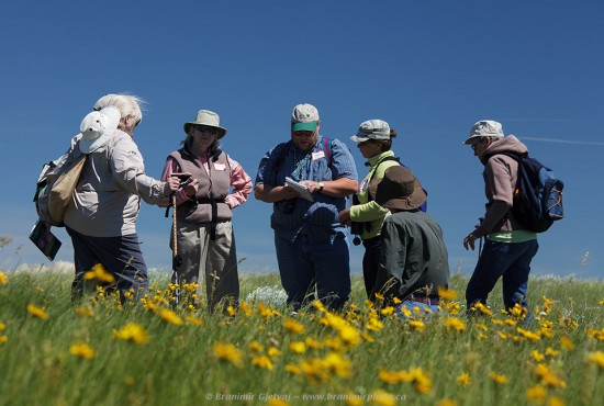 Wildflower survey at the ld Man on His Back Conservation Area - conservation volunteers at work