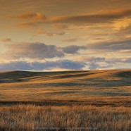 Great Sand Hills book among top 30 best-sellers in Saskatchewan
