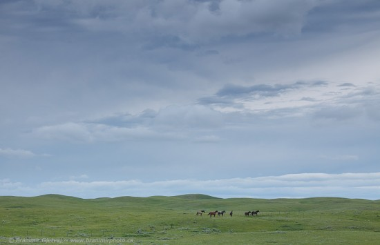 Horses in prairie near Auvergne-Wise Creek PFRA pasture, Saskatchewan