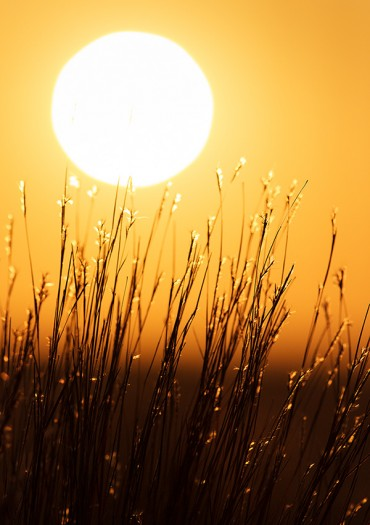 Sun disk and backlit blades of grass. Grasslands National Park, Saskatchewan