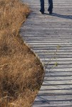 Person standing on a boardwalk. Cranberry Flats Conservation Area