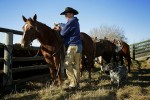 Wolverine PFRA pasture manager Eric Weisbeck saddles a horse