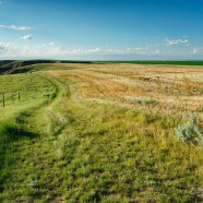 Illustrated talk: Saskatchewan Grasslands – a Vanishing Landscape?