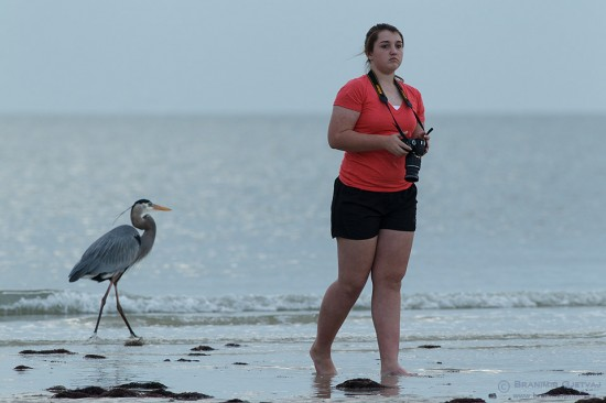 Young woman photographs a Great Blue Heron on a beach.