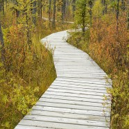 Autumn in Prince Albert National Park