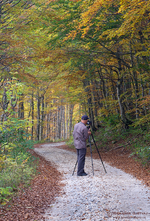 Photographer on path in forest with autumn colours.