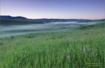 Pasture at sunrise, Waldron Ranch