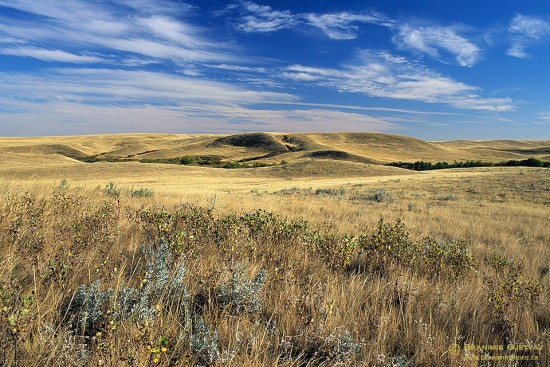 Prairie in Cypress Hills south of Maple Creek, Saskatchewan