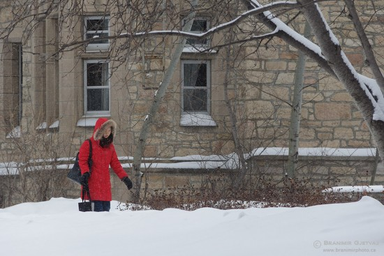 A student waring red jacket walks in a snow storm, University of Saskatchewan, Saskatoon