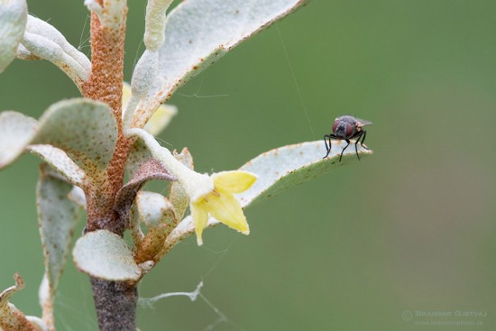 Close-up of a fly on wildflower