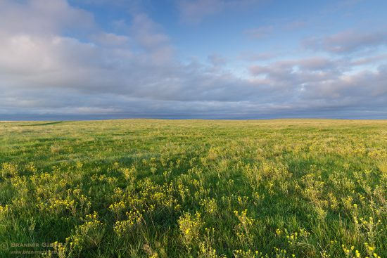 Native prairie at Caledonia-Elmsthorpe PFRA community pasture. Avonlea, Saskatchewan