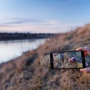 Nature photography with smartphones