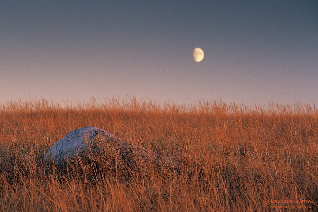 Boulder in prairie with rising moon. Great Sand Hills