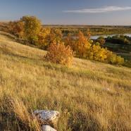 Fall colours along South Saskatchewan River