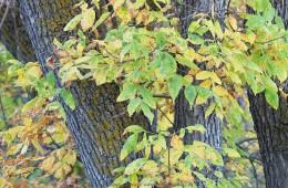 Fall colours in Wanuskewin Heritage Park