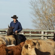 A tribute to the cowboys on PFRA community pastures