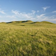 Saskatchewan election – vote for the grasslands