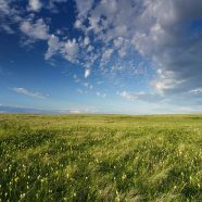Islands of Grass – conserving Canada's native grasslands